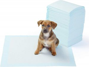 AmazonBasics Dog and Puppy Potty Training Pads, Regular Absorbency